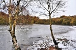 Frozen Kingsmere View with Silver Birches Wallpaper