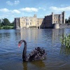 A picture of Leeds Castle