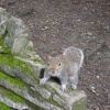 A curious squirrel in a park in Bournemouth. Came within a couple of feet of the camera