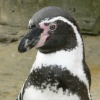 Penquin at SeaLife Centre in Weymouth