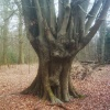 A picture of Epping Forest
