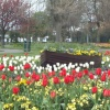 Boat on a sea of Tulips. Beach House Park - Worthing