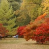 Magnificent Autumn colours at Westonbirt Arboretum, Gloucestershire