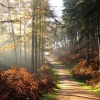 Misty morning in Abraham's valley, Cannock Chase, Staffordshire