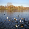 A picture of Weald Country Park