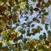 Leaves in Autumn in The New forest - Hampshire