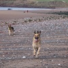 Dogs day out - Seamill, St Bees, Cumbria