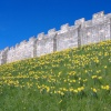 York City Walls in Spring.