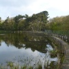Osborne's Pond, Shipley Country Park, Derbyshire