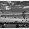 Harvesting time, Arthington, West Yorkshire
