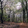 Early Spring at Wendover Woods, Nr Aylesbury, Bucks