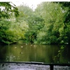 Thornton-le-Dale Duck pond