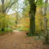 Autumn at Respryn, Lanhydrock, Bodmin