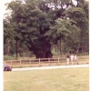 The Major Oak - At Sherwood Forest - Nr Edwinstowe - This was in 1982 - The tree as now supported.
