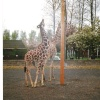 Twycross Zoo, Twycross, Leicestershire. 1996