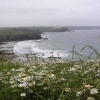 Wildflowers and wild weather, Pedngwinian, Lizard, Cornwall