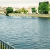 River Ayr, dozens of swans through Ayr, Scotland