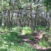 In the Ashdown Forest, the 'Hundred Acre Wood' of Pooh Bear. East Sussex