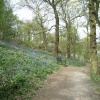 The Outwoods, nr Loughborough, Leicestershire