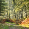 Autumn on Cannock Chase