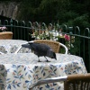 Wildlife in Grasmere, Cumbria