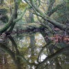 Reflection in The New Forest, Hampshire