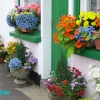 Wonderful flower display, Sticklepath, Devon