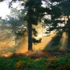 Autumn Mists on Cannock Chase