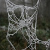 Frost on a web
