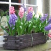 Window box in Eyam
