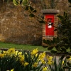 Daffodils and postbox, Adderbury, Oxon