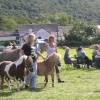 Dunsford Fair ponies - July 2007