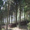 Grizedale Forest Park, Hawkshead, Cumbria