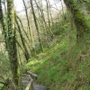 Lydford Gorge in spring green