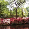 The glorious splashes of colour in the Isabella Plantation