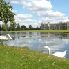 Audley End House   (and swans)