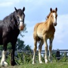 Foal and mare at Howden Dyke