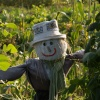 Attractively designed scarecrow, Steeple Claydon allotments, Bucks