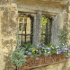 Castle Combe windowbox