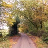 Sauncey Wood / Common Lane - Harpenden - Autumn 2008