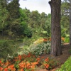 Beside the lake at Leonardslee Gardens, Sussex