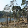 Brownsea Island Nature Reserve