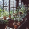 Houseplants at Ightham Mote, kent