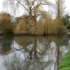 Wilton village pond