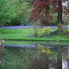 Bluebell reflections