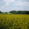 Yellow fields (Oil seed rape)