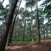 The woods at the Lickey Hills
