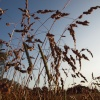 Grasses, Twyford, Bucks