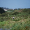 Marazion marshes with grey heron swooping in