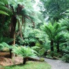 Cornish Palms and Ferns